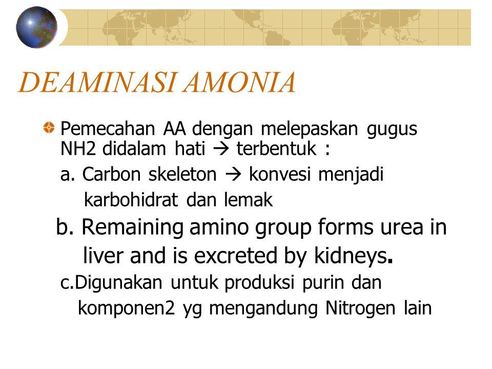 Perubahan amoniak  ureum (di hati) Amoniak Karbondioksida Amoniak C H C H H – N – H + O + H – N – H H – O – H air H O H H - N - C – N - H Ureum