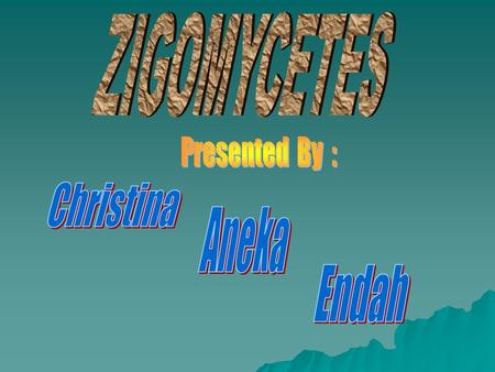 ZIGOMYCETES Presented By : Christina Aneka Endah.