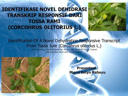 IDENTIFIKASI NOVEL DEHIDRASI TRANSKRIP RESPONSIF DARI TOSSA RAMI (CORCOHRUS OLITORIUS L.) Identification Of A Novel Dehydration Responsive Transcript From.