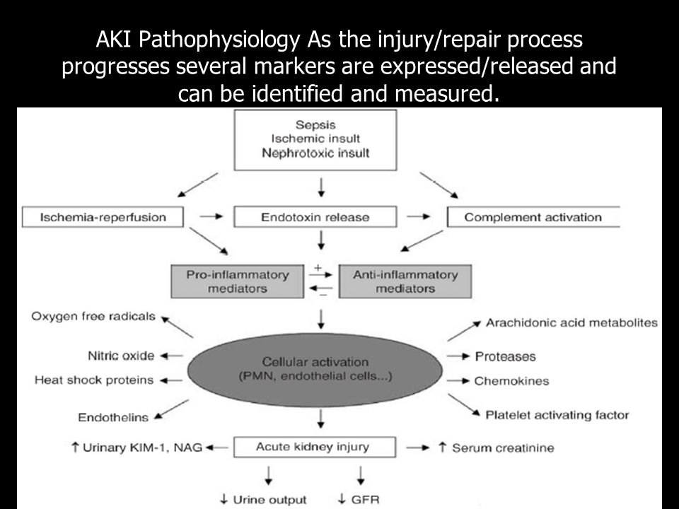 AKI Pathophysiology As the injury/repair process progresses several markers are expressed/released and can be identified and measured.