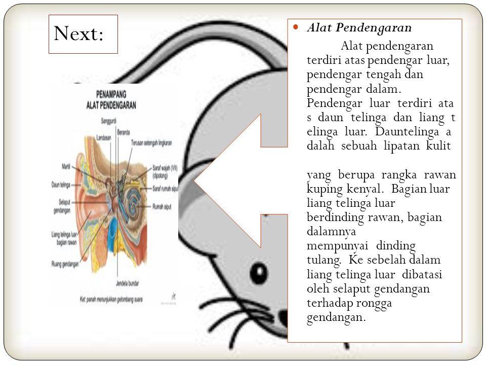 Next: Alat Pendengaran