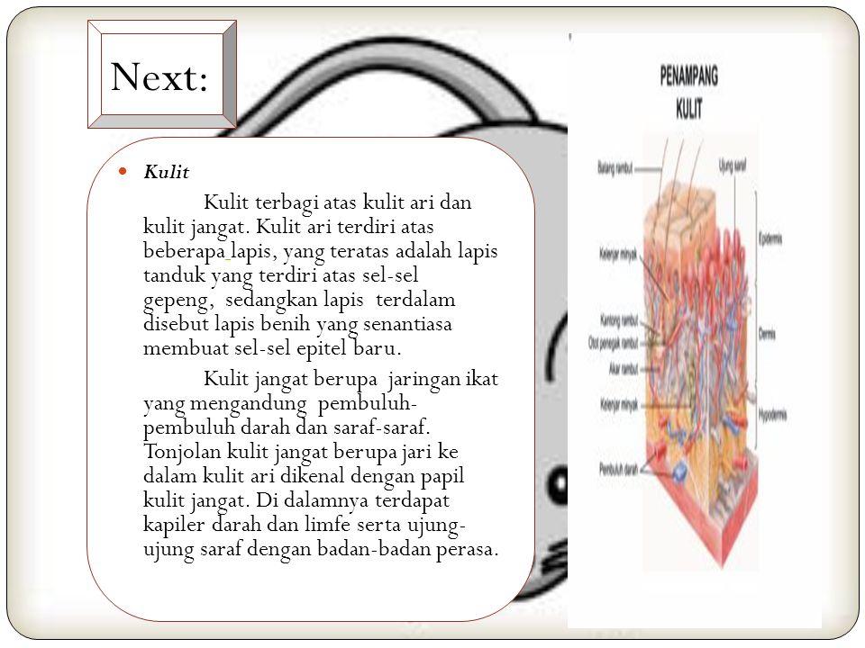 Next: Kulit.