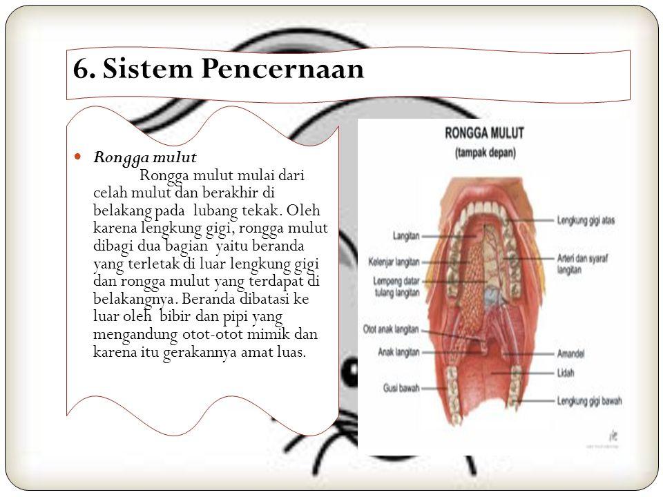 6. Sistem Pencernaan