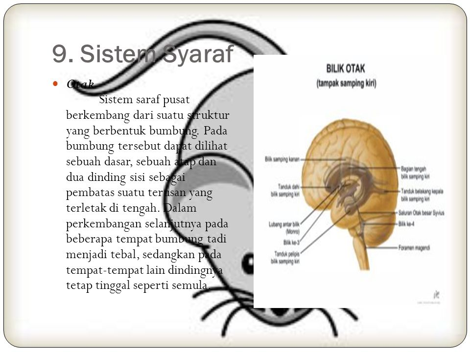 9. Sistem Syaraf