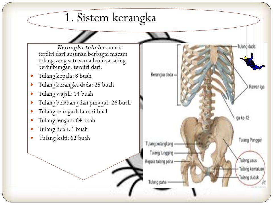 1. Sistem kerangka Kerangka tubuh manusia terdiri dari susunan berbagai macam tulang yang satu sama lainnya saling berhubungan, terdiri dari: