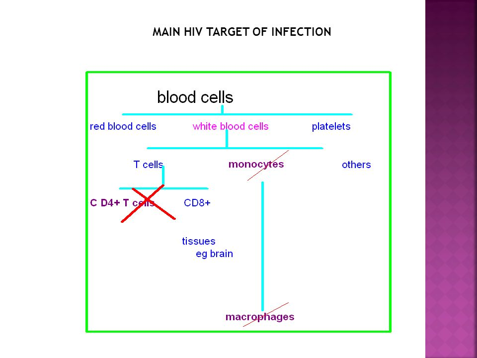 MAIN HIV TARGET OF INFECTION
