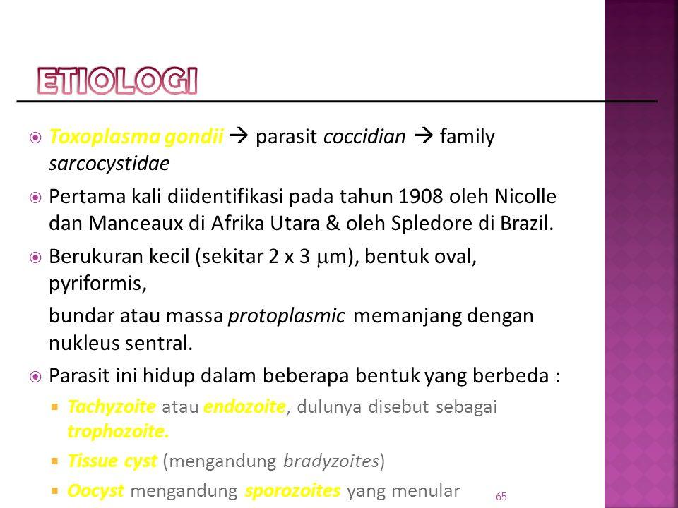 ETIOLOGI Toxoplasma gondii  parasit coccidian  family sarcocystidae