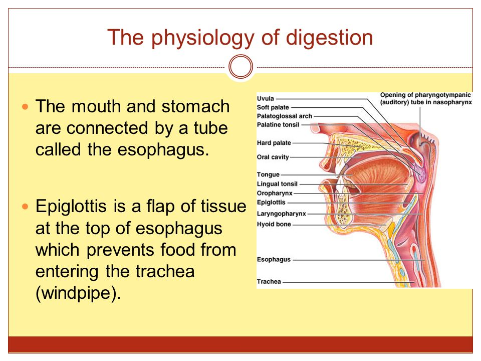 The physiology of digestion