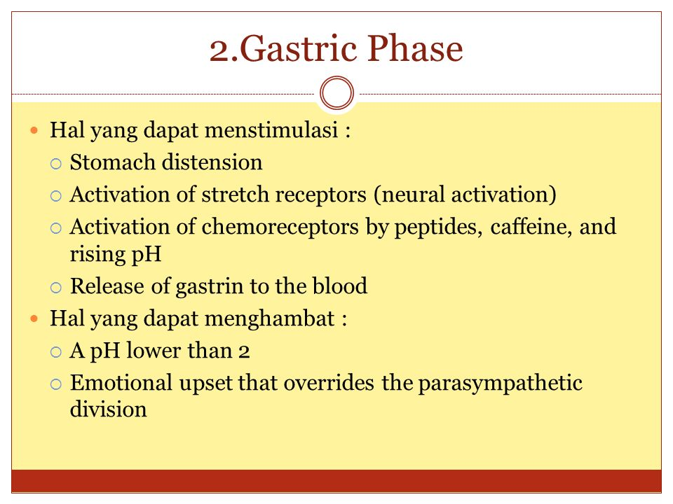 2.Gastric Phase Hal yang dapat menstimulasi : Stomach distension