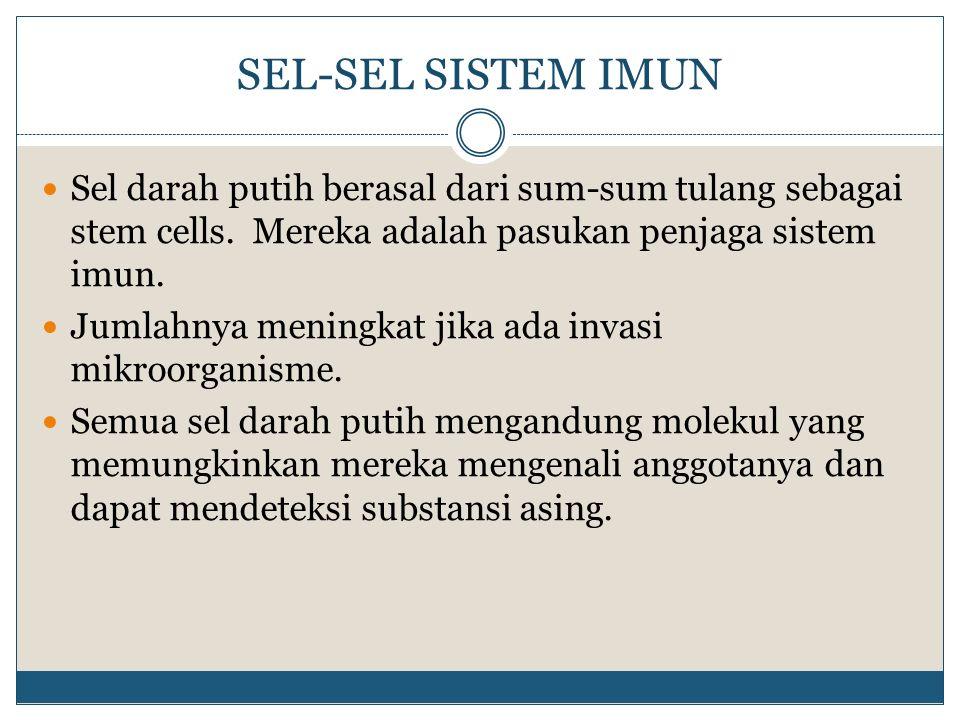 SEL-SEL SISTEM IMUN Sel darah putih berasal dari sum-sum tulang sebagai stem cells. Mereka adalah pasukan penjaga sistem imun.