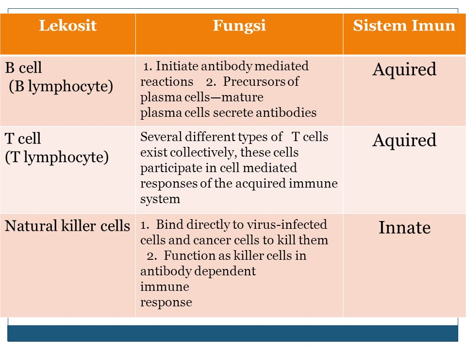 Aquired Innate Lekosit Fungsi Sistem Imun B cell (B lymphocyte) T cell
