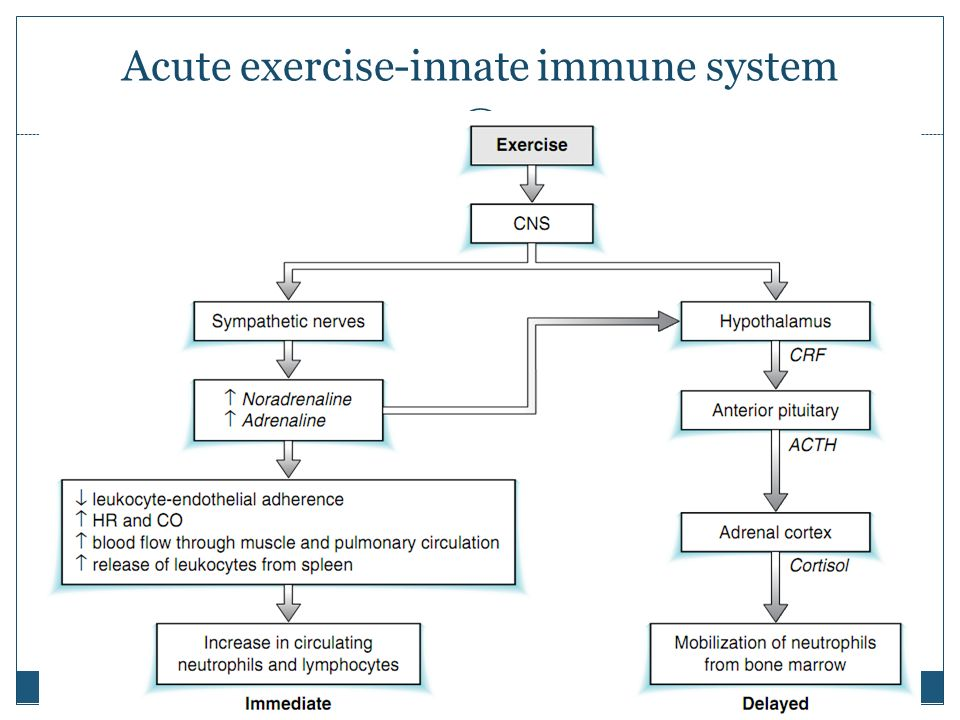 Acute exercise-innate immune system
