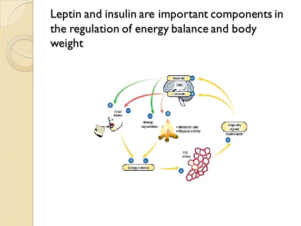 Leptin and insulin are important components in the regulation of energy balance and body weight
