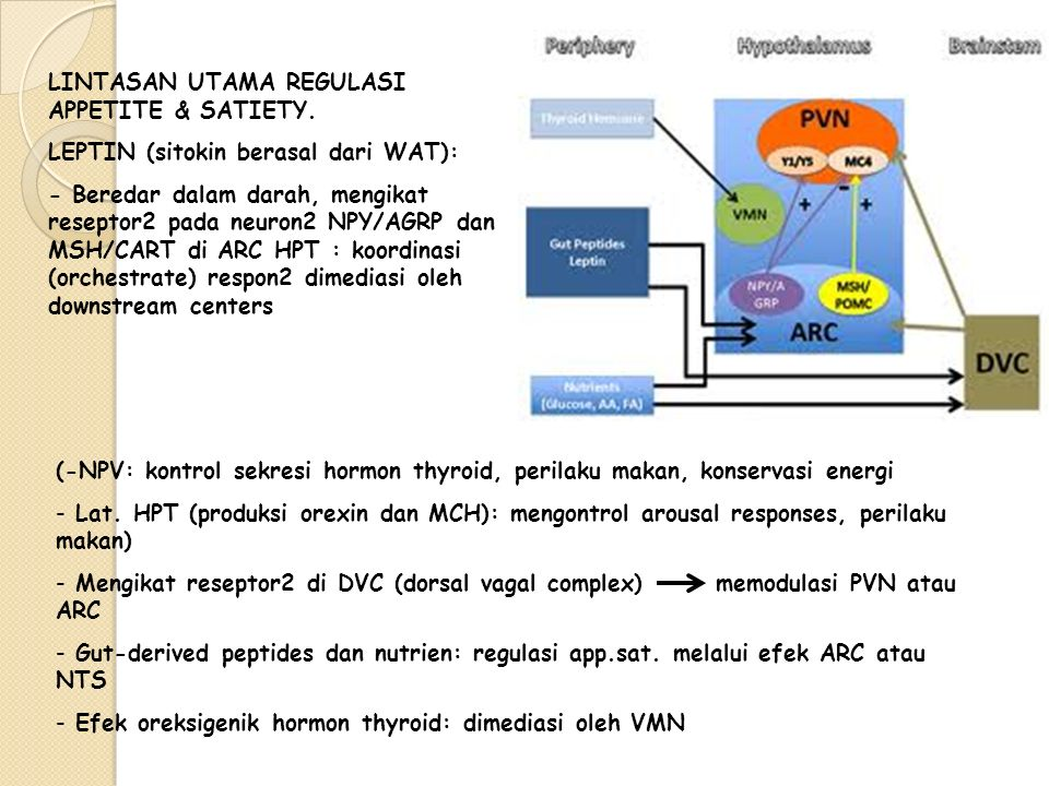 LINTASAN UTAMA REGULASI APPETITE & SATIETY.