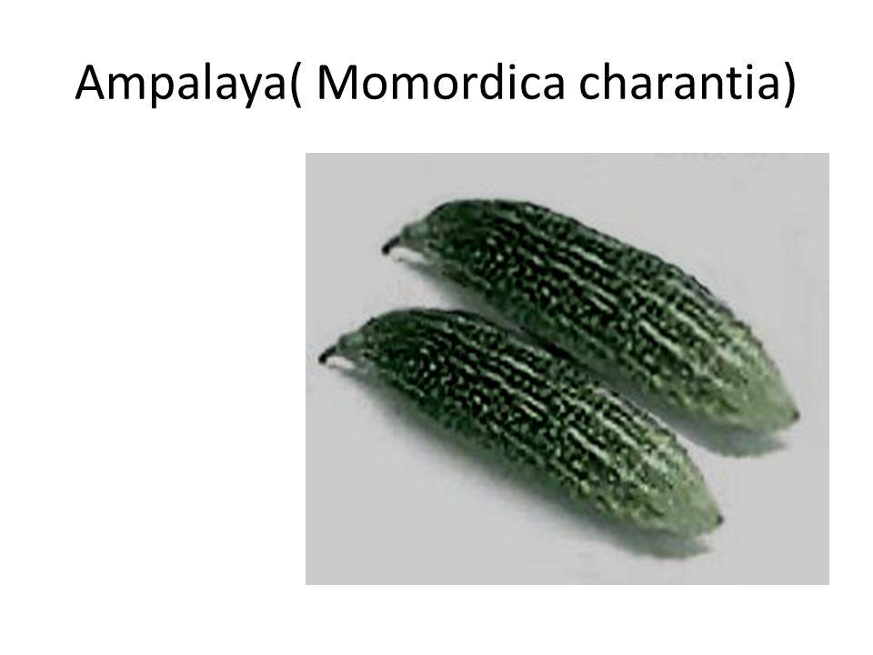 Ampalaya( Momordica charantia)