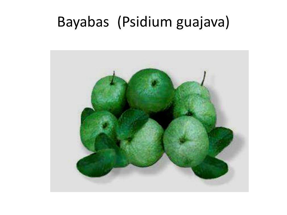 Bayabas (Psidium guajava)