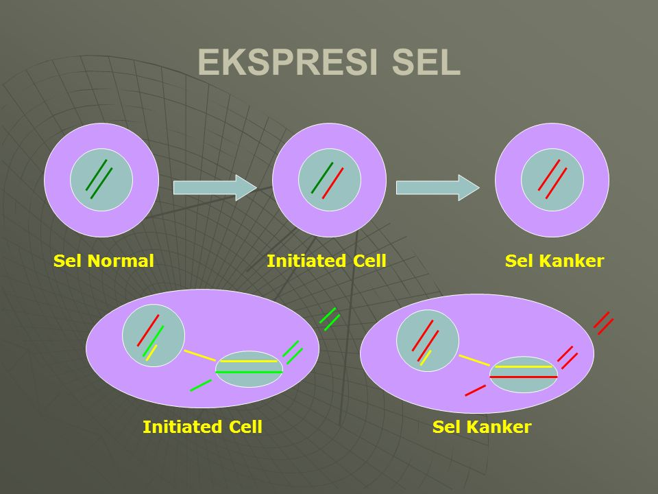 EKSPRESI SEL Sel Normal Initiated Cell Sel Kanker Initiated Cell