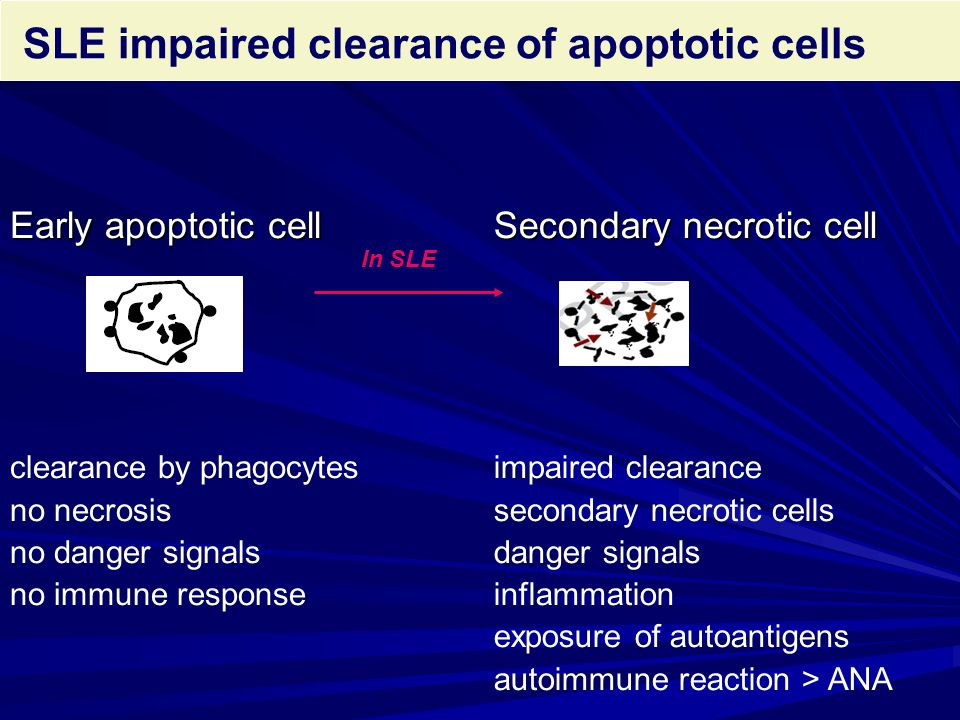 SLE impaired clearance of apoptotic cells