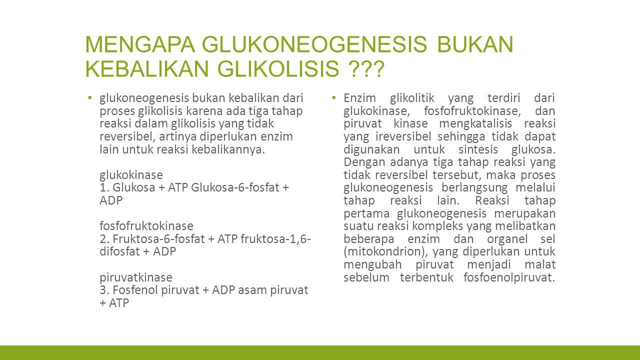 Mengapa glukoneogenesis bukan kebalikan glikolisis