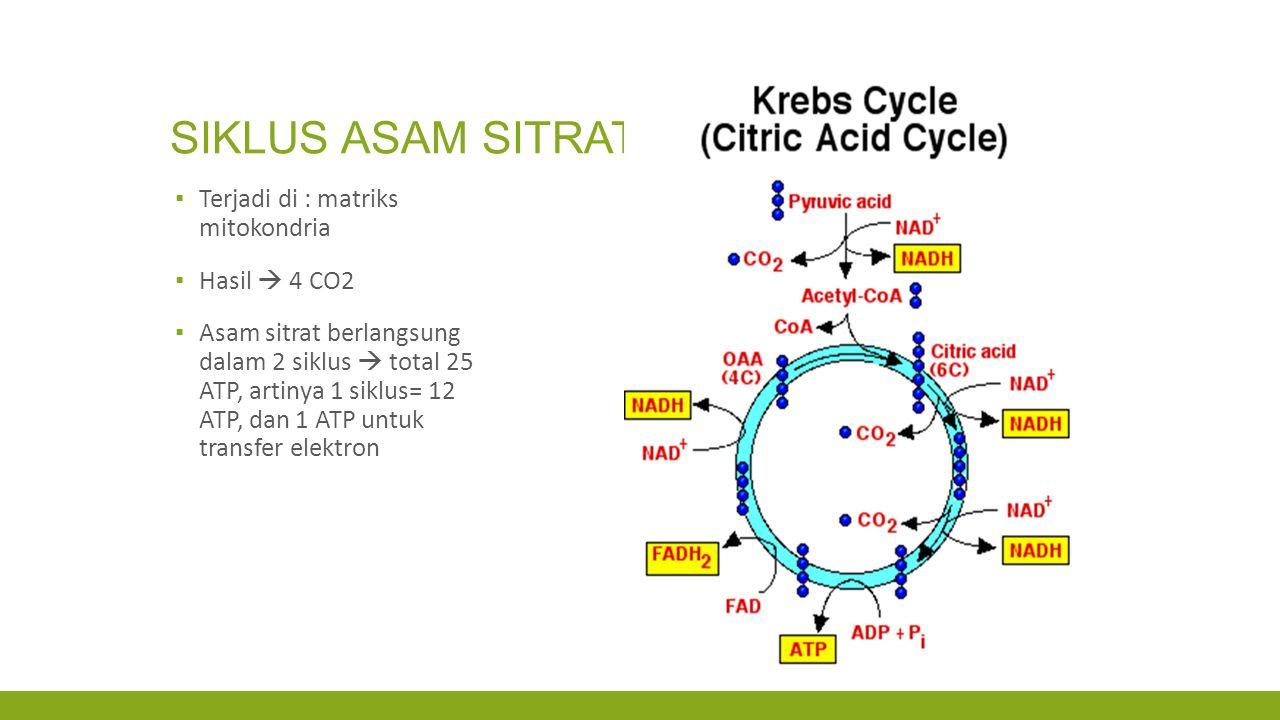 SIKLUS ASAM SITRAT Terjadi di : matriks mitokondria Hasil  4 CO2