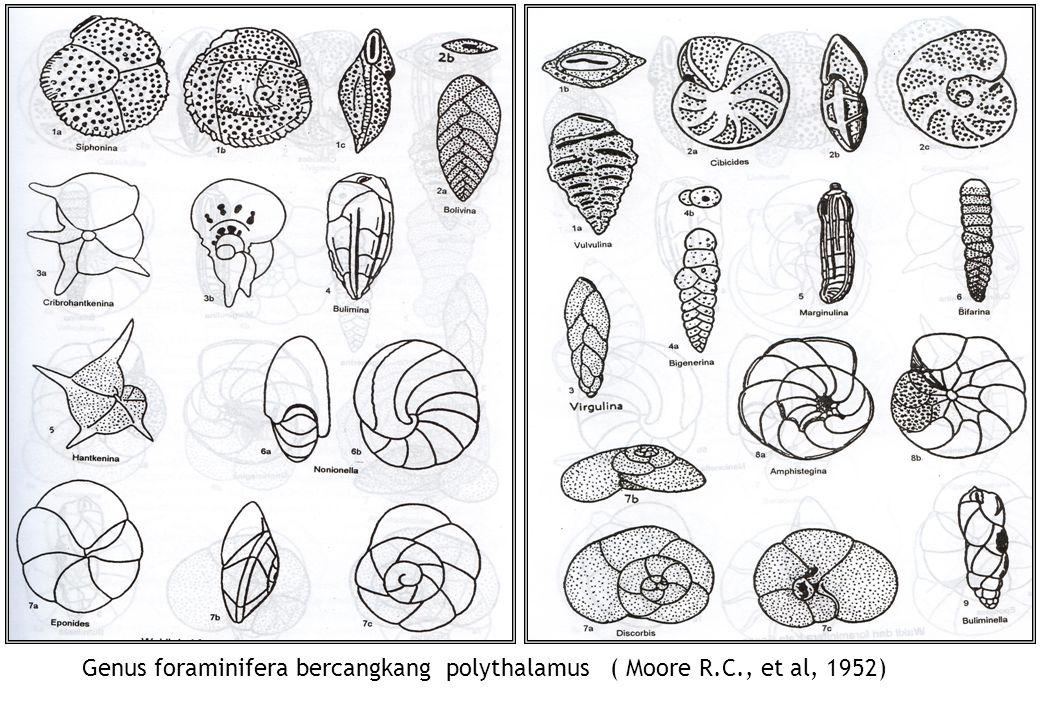 Genus foraminifera bercangkang polythalamus ( Moore R.C., et al, 1952)