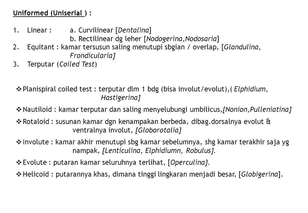 Uniformed (Uniserial ) :