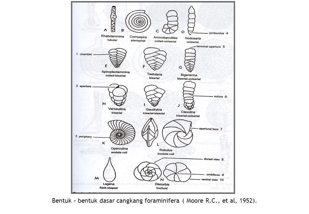 Bentuk – bentuk dasar cangkang foraminifera ( Moore R. C