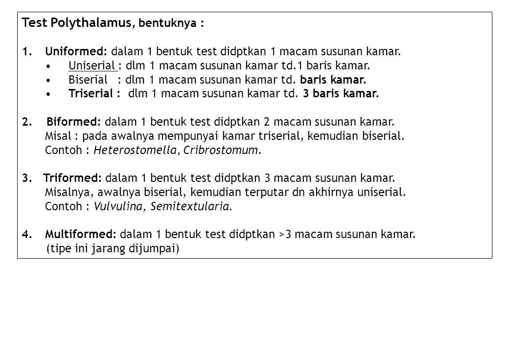 Test Polythalamus, bentuknya :