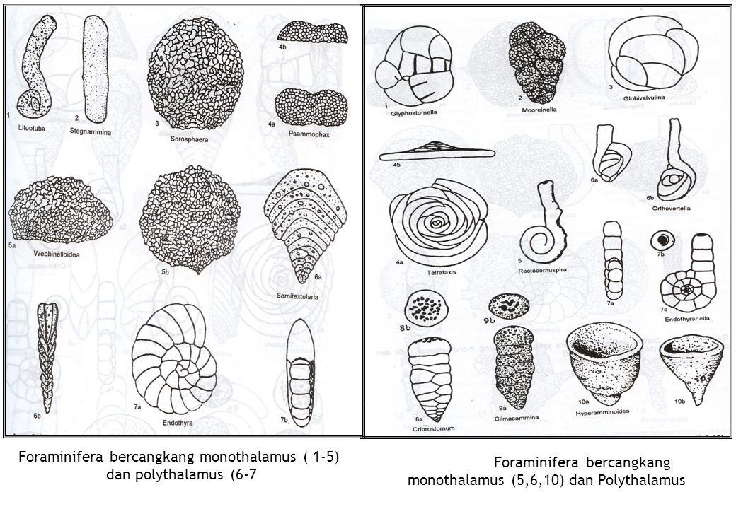 Foraminifera bercangkang monothalamus ( 1-5) dan polythalamus (6-7