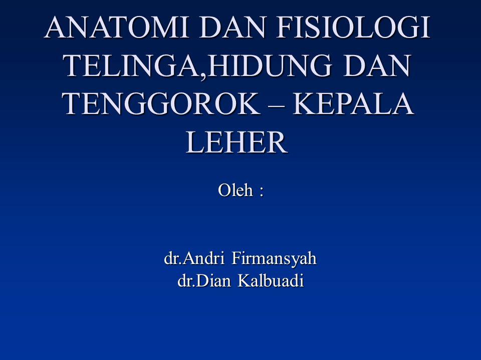 ANATOMI DAN FISIOLOGI TELINGA,HIDUNG DAN TENGGOROK – KEPALA LEHER