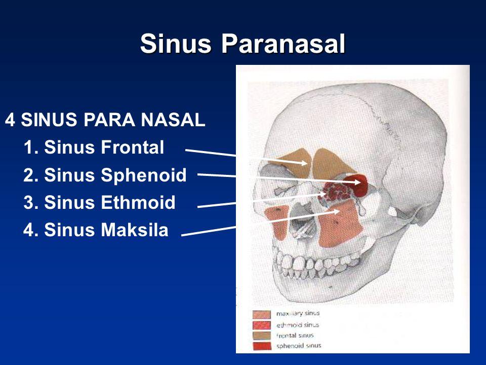 Sinus Paranasal 4 SINUS PARA NASAL 1. Sinus Frontal 2. Sinus Sphenoid
