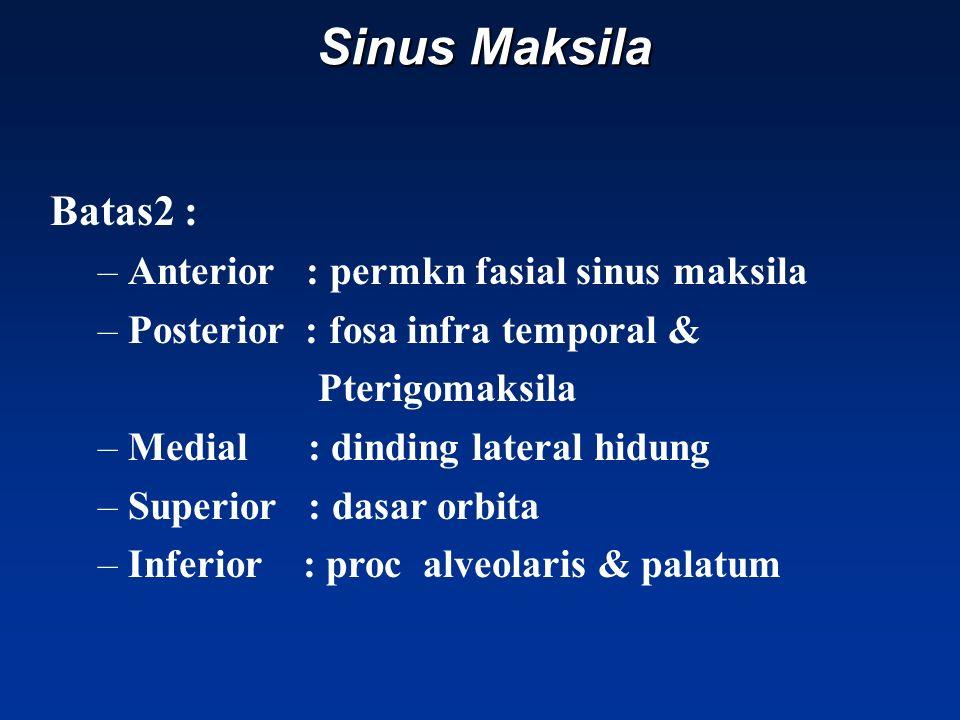 Sinus Maksila Batas2 : Anterior : permkn fasial sinus maksila