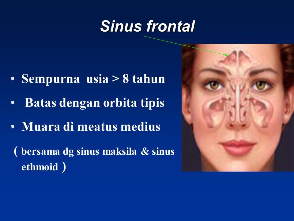 Sinus frontal Sempurna usia > 8 tahun Batas dengan orbita tipis