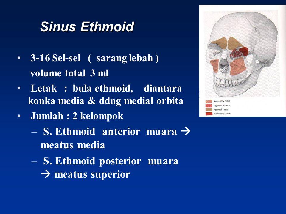 Sinus Ethmoid S. Ethmoid anterior muara  meatus media