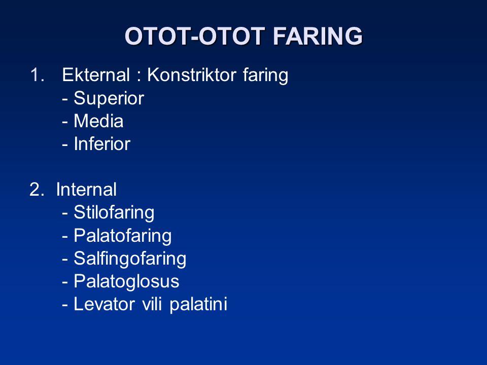 OTOT-OTOT FARING Ekternal : Konstriktor faring - Superior - Media