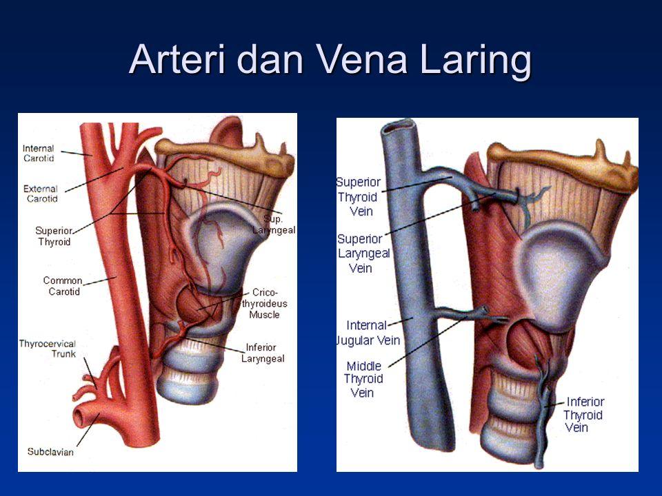 Arteri dan Vena Laring