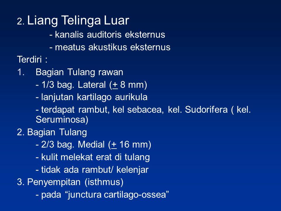 2. Liang Telinga Luar - kanalis auditoris eksternus. - meatus akustikus eksternus. Terdiri : Bagian Tulang rawan.