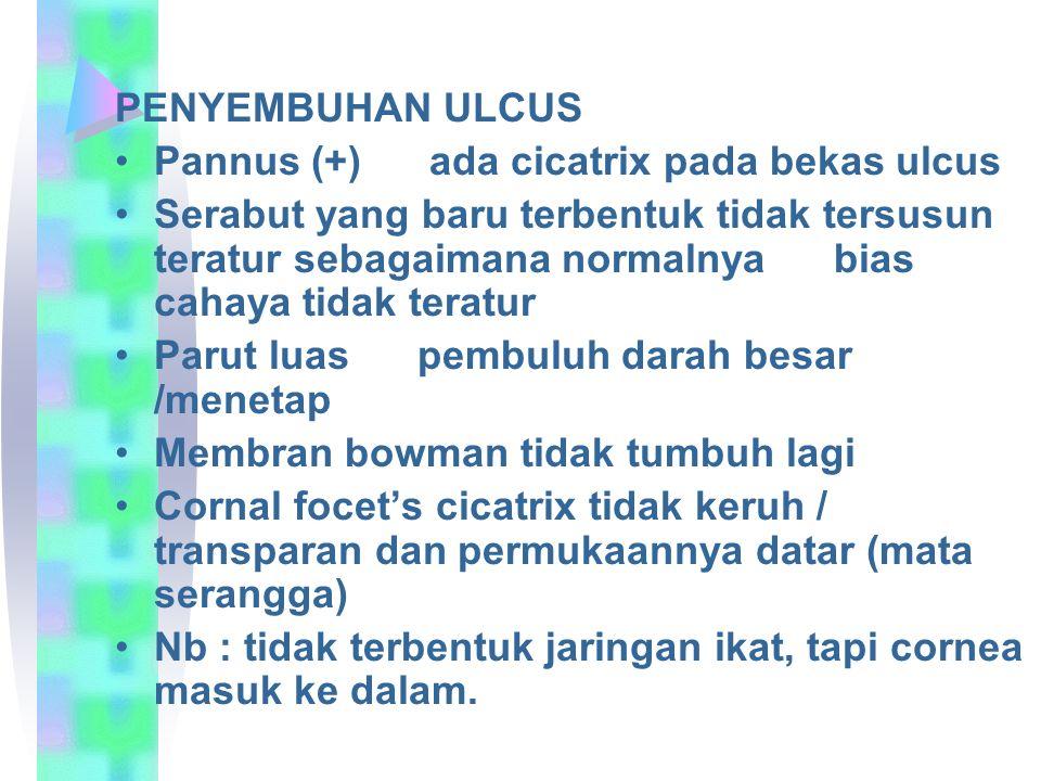 PENYEMBUHAN ULCUS Pannus (+) ada cicatrix pada bekas ulcus.