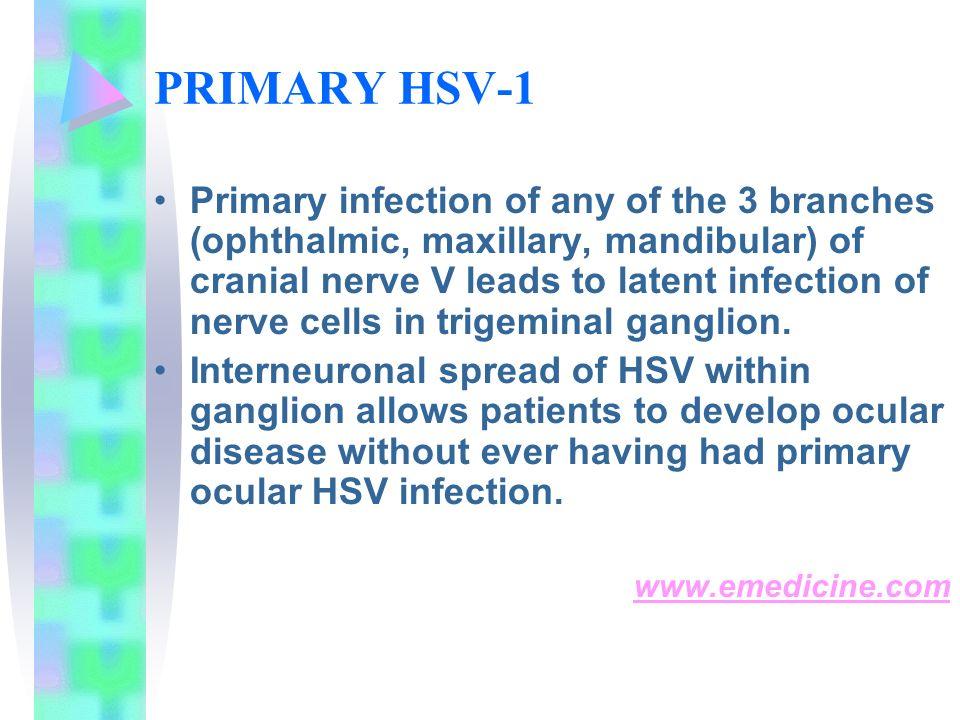 PRIMARY HSV-1