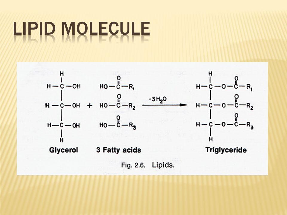 Lipid Molecule