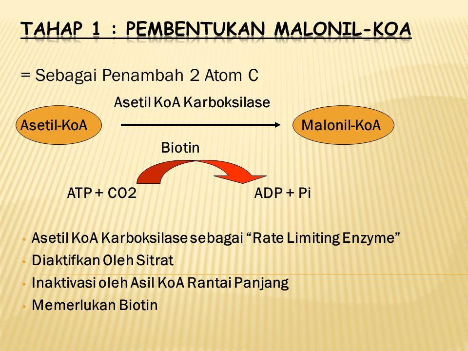 Tahap 1 : Pembentukan Malonil-KoA