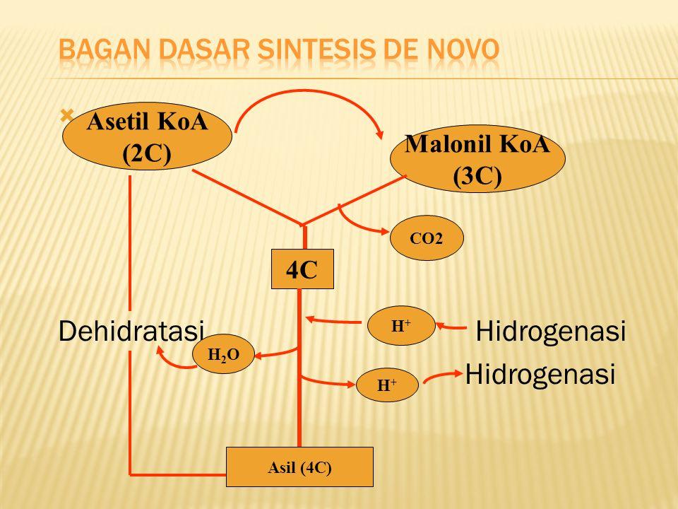Bagan Dasar Sintesis de Novo