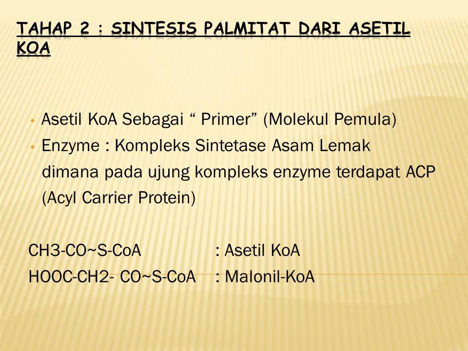 Tahap 2 : Sintesis Palmitat dari Asetil KoA