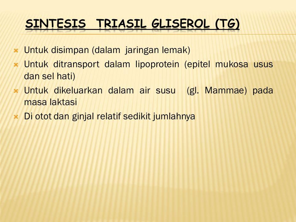 SINTESIS TRIASIL GLISEROL (TG)