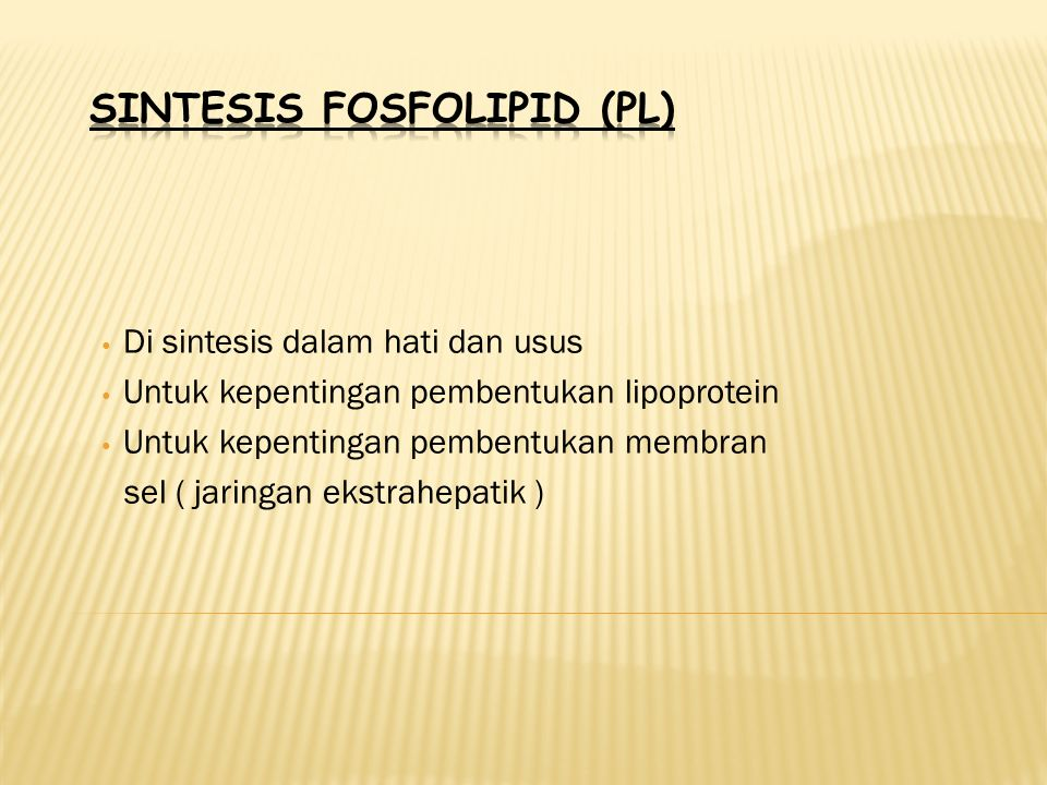 SINTESIS FOSFOLIPID (PL)