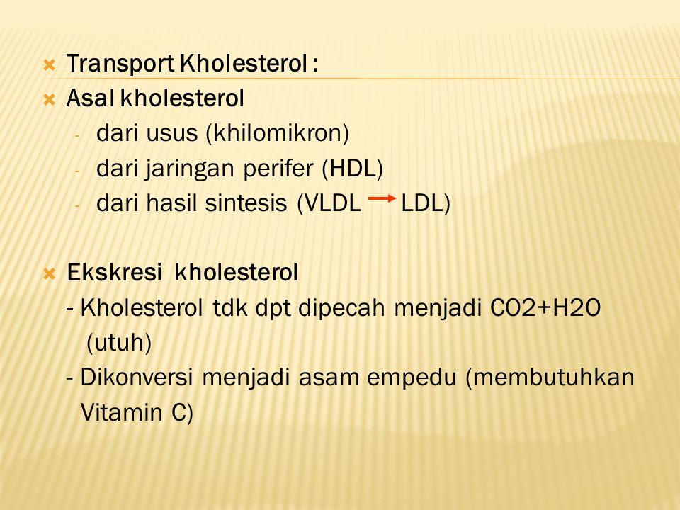 Transport Kholesterol :