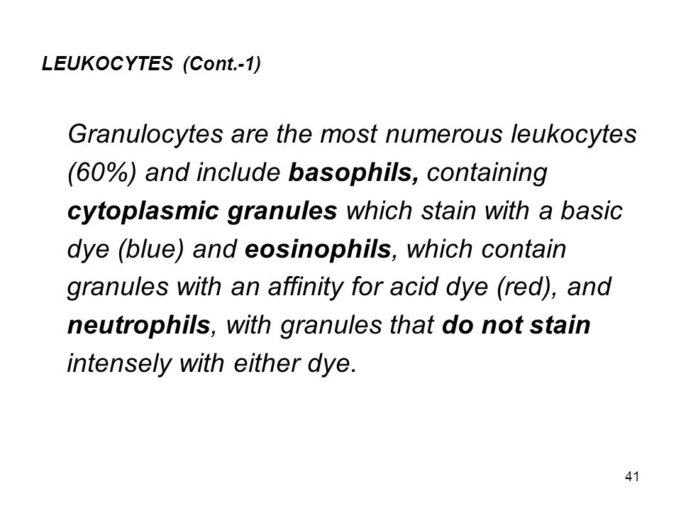 Granulocytes are the most numerous leukocytes