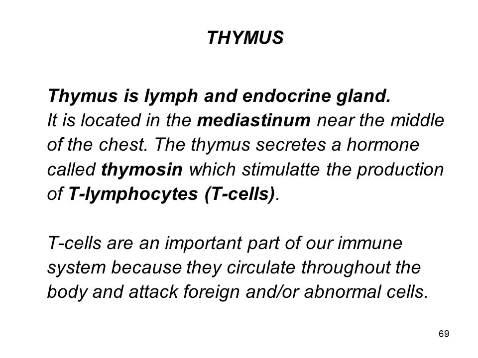 Thymus is lymph and endocrine gland.