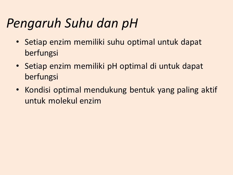 Pengaruh Suhu dan pH Setiap enzim memiliki suhu optimal untuk dapat berfungsi. Setiap enzim memiliki pH optimal di untuk dapat berfungsi.