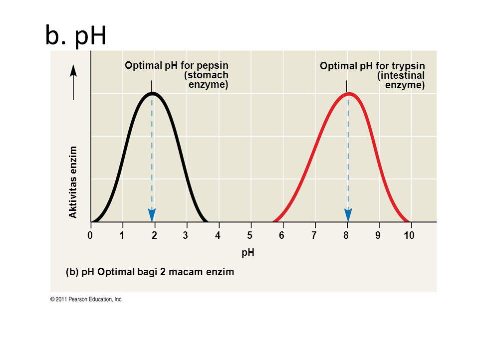 b. pH Aktivitas enzim. 1. 2. 3. 4. 5. 6. 7. 8. 9. 10. pH. (b) pH Optimal bagi 2 macam enzim.
